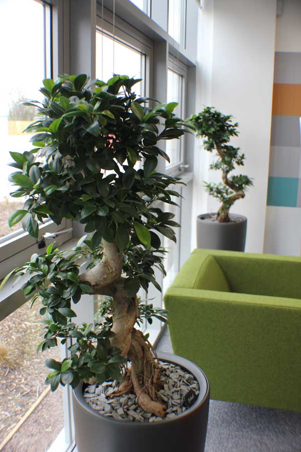 buy office plants sales optional maintenance