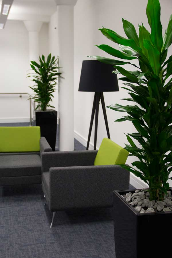 office plant displays large office plant displays in manchester o