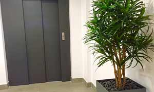 Artificial plants & fake office plants
