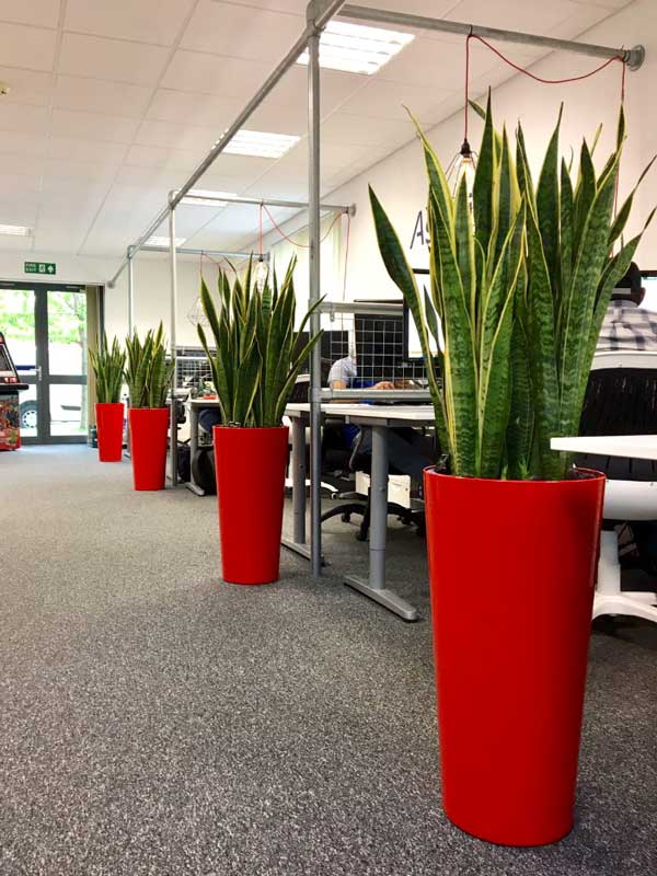 office plant displays. Highest Quality Office Plants Plant Displays
