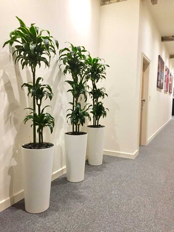 office plant displays. Fine Office Highest Quality Office Plants  To Office Plant Displays