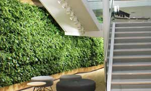 Green walls & living walls