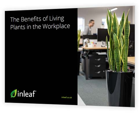 The Benefits of Living Plants in the Workplace