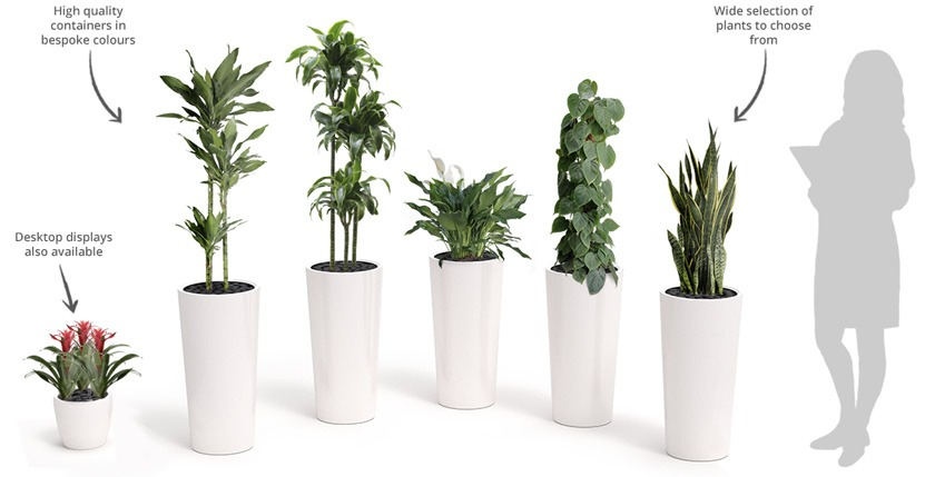 office plant displays. Office Plant Package Displays