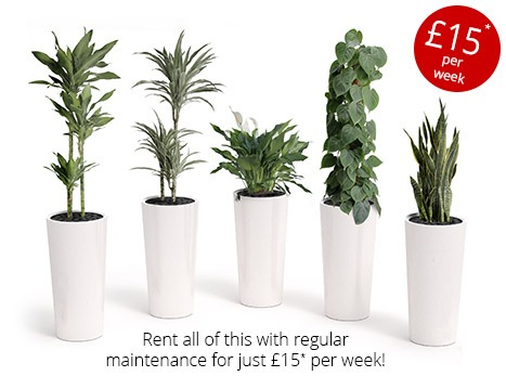 office plant prices - Office Plants