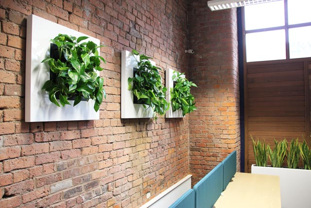 Live Picture wall displays and trough planters