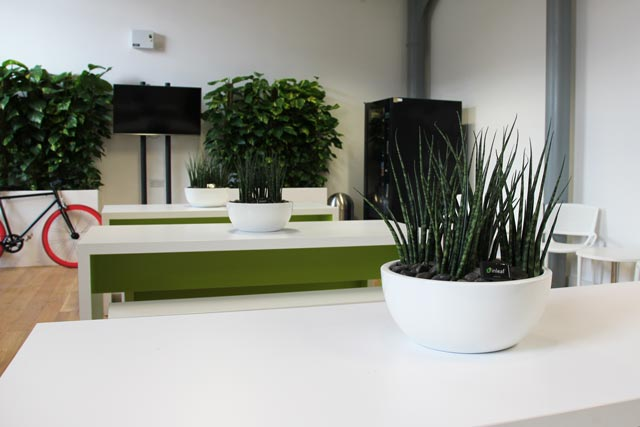 Living plants for office canteen