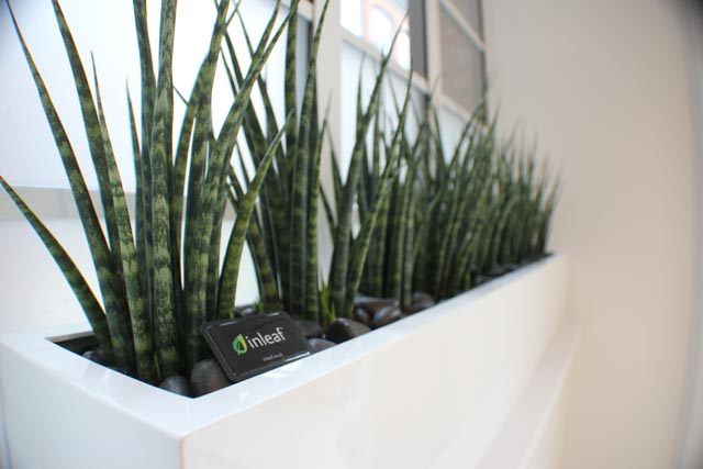 office plant displays. Window Sill Plant Displays Office T