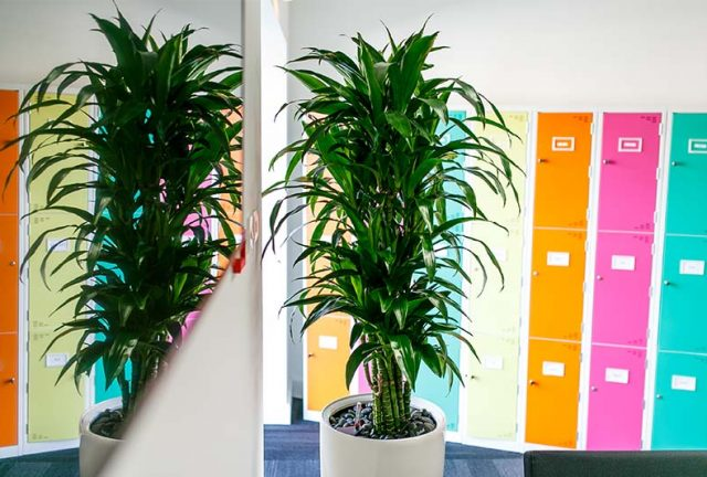 Office plant in office