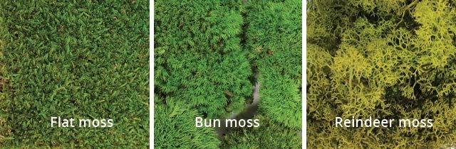 Preserved moss types