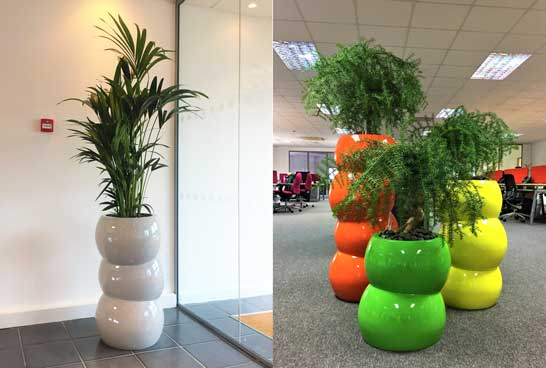 office plant displays. Vibrant Plant Displays For Aylesbury Office