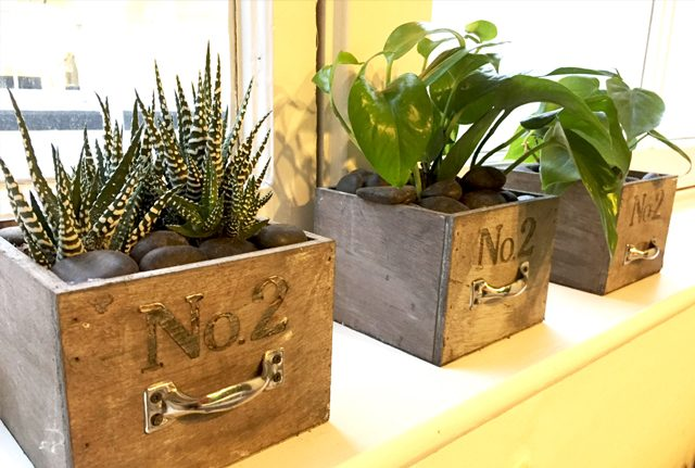 Reception desk plant rental