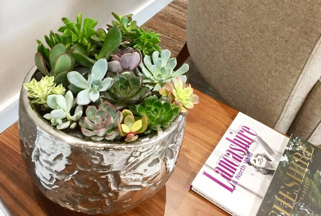 Mixed succulent reception plant display