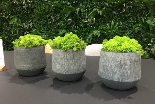 Preserved moss desktop displays