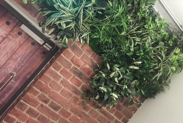Bespoke green wall