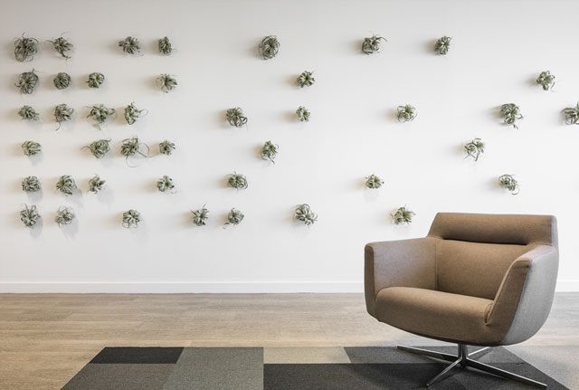 Air plant wall design