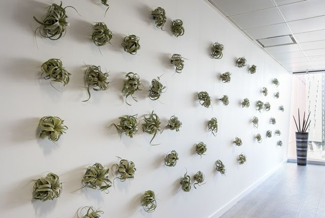 Inleaf air plant wall in Manchester office