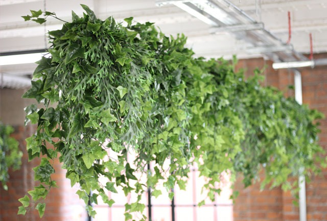 Artificial plants suspended from ceiling